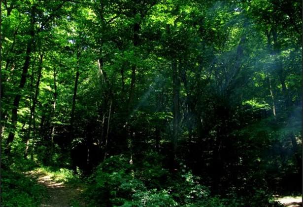 budai-šuma1