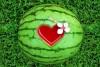 lubenica13