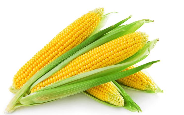 kukuruz za trkače