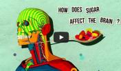 kako šećer utiče na mozak