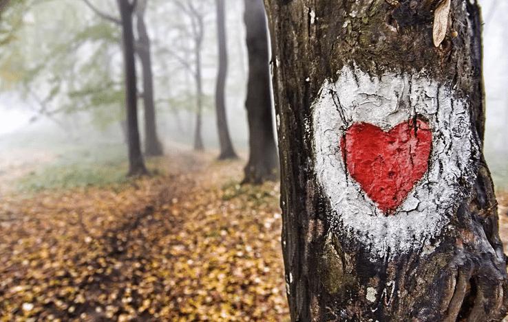 srce u sumi